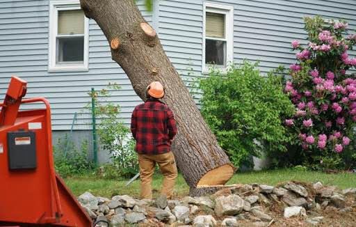 Picture of a tree removal for a customer in clarksville, TN